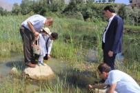 SÜMBÜL DAĞI - Sülük Göletine 15 Bin Sazan Bırakıldı