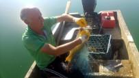 KARADENIZ - Av Yasağının Kalkmasıyla Ağlar Çekiliyor