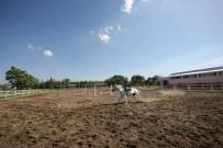 BEDENSEL ENGELLİ - Binicilik Dersleriyle Atçılık Sevgisi Aşılanıyor
