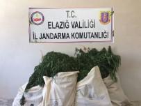 Elazığ'da 7 Bin Kök Hint Keneviri Ve 51 Kilo Esrar Ele Geçirildi
