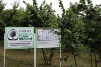ÇOCUK İŞÇİ - Ferrero Fındık Yetkilileri Üretici İle Bir Araya Gelerek Bahçe Günleri Yapıyor