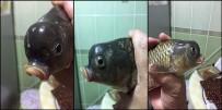 AHMET TÜRK - Oltasına Takılan Balık Şaşırttı
