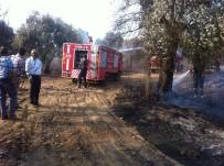 ZEYTİN AĞACI - Sultanhisar'da Yangın