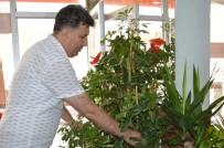 DEKORASYON - Yaz Ayları Çiçekçilerin Bayramı