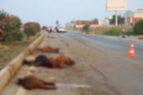 SULUCA - Adana'da Otomobil Sürüye Daldı Açıklaması 30 Hayvan Telef Oldu