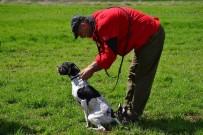 KÖPEK - Av Köpeği Eğitimde Dikkat Edilmesi Gerekenler