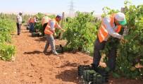 SOSYAL YARDIM - Büyükşehir'den Dar Gelirli Ailelere Taze Meyve İkramı