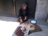 SOKAK KÖPEĞİ - Felçli Köpeğe Anne Şefkati