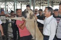 AHMET ATAÇ - Küçükbaş Çoban Festivali'ne Yoğun İlgi