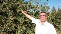 KARAHıDıR - Deveci Armudunu Güneş Vurdu, Çiftçi Erteleme Bekliyor
