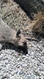 KÖPEK - Akçadağ'da Siyanür İle Köpek Katliamı İddiası