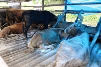 Cerattepe'de Hayvan Zehirlenmesi Vakası