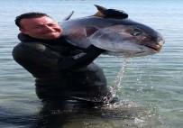 ZIPKIN - Dev Balığı Zıpkınla Avladı