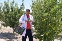 TARIM İLACI - Faydalı Böcekler Kayseri'de İş Başında