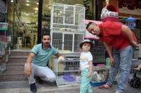 PETSHOP - Malatya'da İskoç Kedisi Merakı