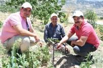 FEROMON - Mersin'de Antep Fıstığı Üretimi Yeniden Canlandırıldı