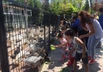 DENİZ CANLILARI - Mini Hayvanat Bahçesi, Sahipsiz Ve Bakıma Muhtaç Hayvanlara Yuva Oldu