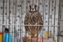 ORMAN VE SU İŞLERİ BAKANLIĞI - Yabani Kuşlar Vahşi Yaşama Dönmek İçin Gün Sayıyor
