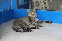 SOKAK KEDİSİ - Sıcaktan Bunalan Kedi Marketin Kapısını Mesken Tuttu