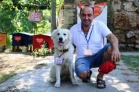 TARİHİ SAAT KULESİ - Turizm Elçisi Kedilerin Koruması Fenomen Köpek 'Aras'
