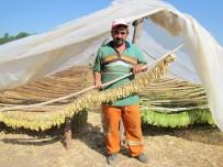 Çiftçiler, Daha Karlı Olan Tütün Ekimine Yöneldi