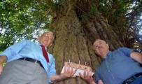 YAYLA ŞENLİKLERİ - Dünyanın En Yaşlı 5 Ağacından Birine Pastalı Kutlama