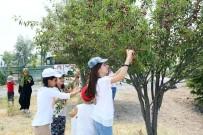 ÜSTÜN ZEKALI - Keçiörenli Çocuklar Yaz Kampında Hem Eğleniyor Hem Öğreniyor