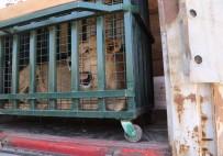 ORMAN VE SU İŞLERİ BAKANI - Kraliçenin Baktığı Savaş Mağduru Yaban Hayvanları Bursa'da