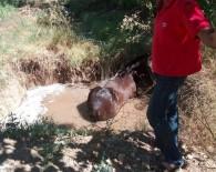 KAYISI BAHÇESİ - Su Dolu Çukura Düşen Atı İtfaiye Ekipleri Kurtardı