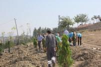ALTUNIZADE - Sungurlu Belediyesi 920 Fidanı Toprakla Buluşturdu