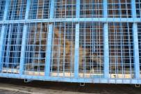 ORMAN VE SU İŞLERİ BAKANI - Suriye'deki Yaban Hayvanları Artık Güvende