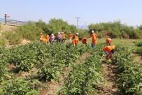 HALK OYUNLARI - Tarım Kampında 4. Gurup Öğrenciler Çapaya Başladı