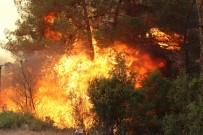 ORMANA - Rüzgarın Etkisi, Yangına Müdahaleyi Güçleştiriyor