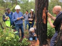 VAHŞİ YAŞAM - TİKA'dan Orman Zararlılarına Karşı Mücadelede Orta Amerika Ülkeleri İle Tecrübe Paylaşımı