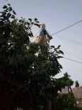 ADLI TıP - Arızayı Gidermek İçin Elektrik Direğine Tırmandı, Canından Oldu