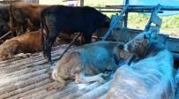 Artvin Tarım İl Müdürlüğü'nden 'Hayvan Zehirlenme Vakası' Açıklaması