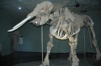 Kahramanmaraş'ın Fil Müzesi