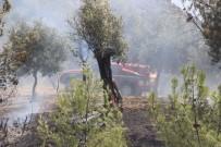 ZEYTİN AĞACI - Ormanlık Alanda Başlayan Yangın Tarım Arazilerine Zarar Verdi