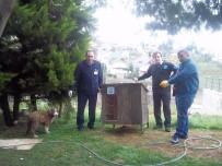 ORTAHISAR - Ortahisar'dan Sokak Hayvanlarına Barınak