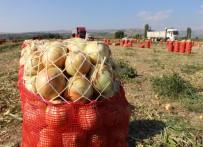 Soğanın Fiyatı Tarlada İki Kat Arttı