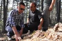 MEHMET YıLDıZ - Soğuksu Milli Parkı, Milyonlarca Yıllık Ağaç Fosillerine Ev Sahipliği Yapıyor