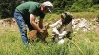 Bitkin Halde Bulunan Yavru Karacayı Besleyip Ormana Bıraktılar