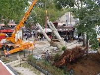 ASIRLIK ÇINAR - Çengelköy'de Fırtınada Devrilen Asırlık Çınar Tekrar Yerine Dikildi