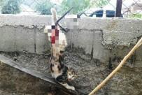 KIRAZLı - İtfaiyeden Kedi Ve Tilki Operasyonu