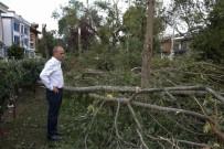 KRİZ MERKEZİ - Kadıköy'de Yüzlerce Ağaç Devrildi