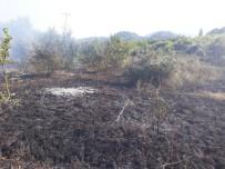 ORMANA - Kastamonu'da Çıkan Anız Yangını, Ormana Sıçramadan Söndürüldü