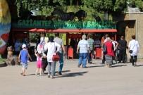 GAZİANTEP HAYVANAT BAHÇESİ - Avrupa'nın En Büyük 3. Hayvanat Bahçesine Ziyaretçi Akını