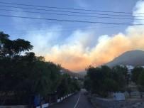 ORMAN İŞÇİSİ - Bodrum'da Yangın 20 Hektar Alana Zarar Verdi