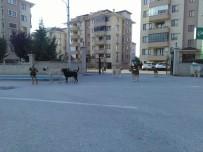 SOKAK KÖPEKLERİ - Bursa'da Köpek İstilası