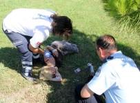 SEYHAN NEHRİ - Genç kadın alkol alıp parkta sızdı!